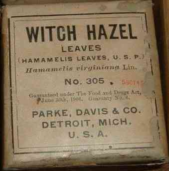 Detroit, Michigan, USA - Witch Hazel Leaves