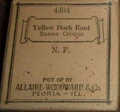 Peoria, Illinois, USA - Yellow Dock Root