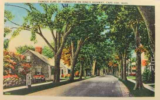 Yarmouth, Massachusetts, USA (South Yarmouth) (West Yarmouth) (Yarmouth Port) - Famous Elms of Yarmouth on King's Highway, Cape Cod, Mass.